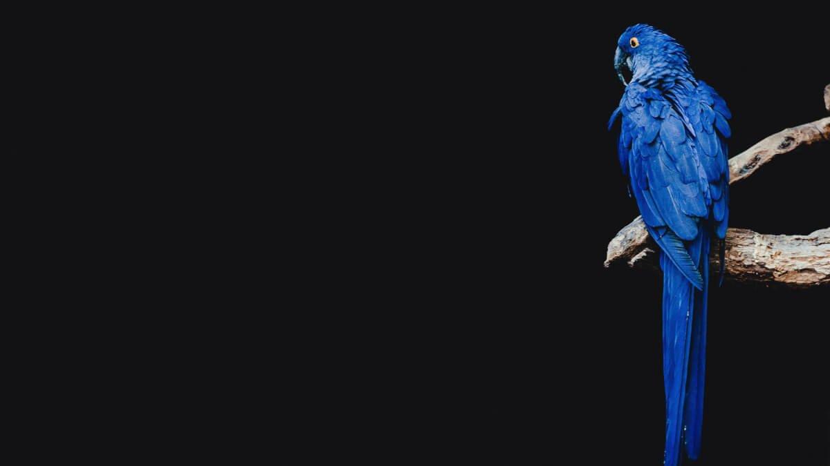 Allt om att ha fåglar som husdjur