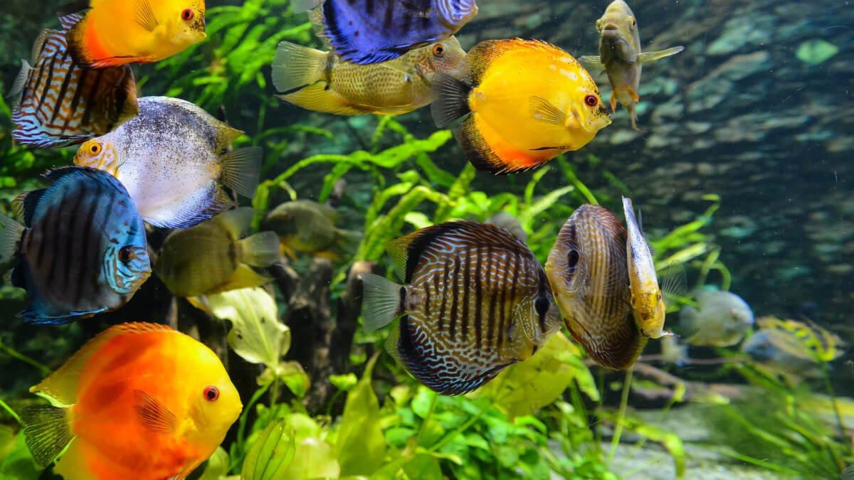 Allt om att ha fiskar som husdjur