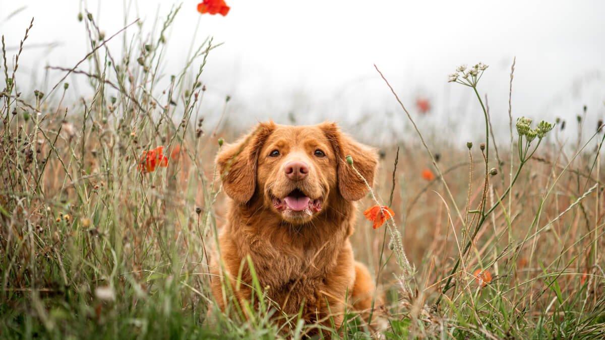 Allt om att ha hund som husdjur