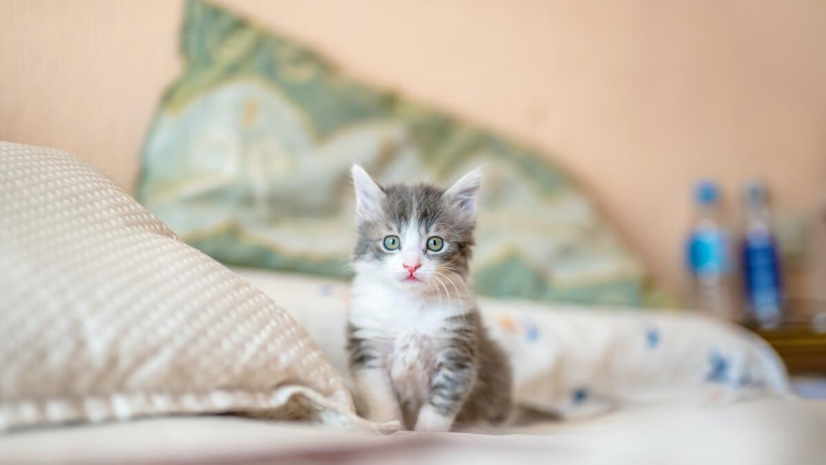 Allt om att ha katter som husdjur